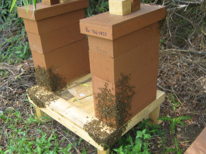 Selected Nucleus Hives.