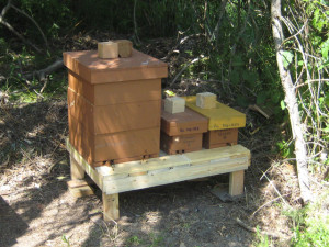 We have a Queen Bee that will perform well in our current beekeeping conditions.